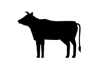 Beef, Jerky Sticks - Box H Farm